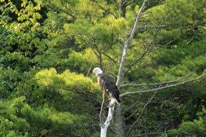 cb-eagle