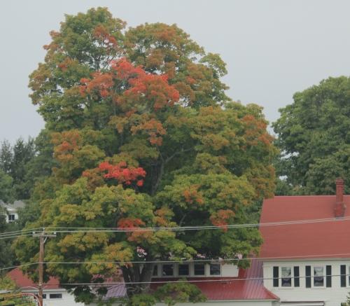 hw-1019-harrison-house-tree